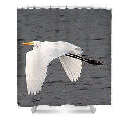 Great White Egret In Flight Shower Curtain by Laurel Talabere