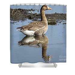 Shower Curtain featuring the photograph Great White Fronted Goose by Ricky L Jones