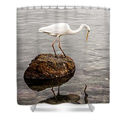 Great White Heron Shower Curtain by Elena Elisseeva