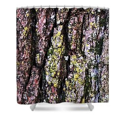 Great White Oak Bark Shower Curtain by John Wartman