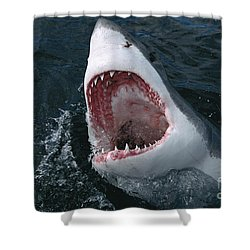 Great White Shark Jaws Shower Curtain by Mike Parry