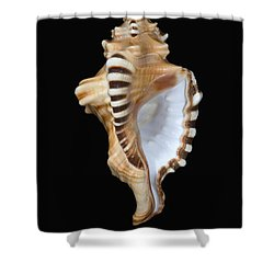 Great White Tooth Shower Curtain by Dave Fleetham - Printscapes