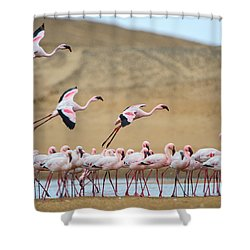 Greater Flamingos Phoenicopterus Shower Curtain by Panoramic Images