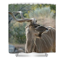 Shower Curtain featuring the photograph Greater Kudu 4 by Fraida Gutovich