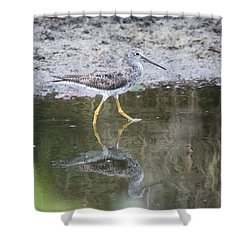 Greater Yellowleg Shower Curtain