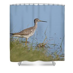 Shower Curtain featuring the photograph Greater Yellowlegs by Kathy Gibbons