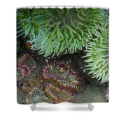 Green And Strawberry Anemonies Shower Curtain