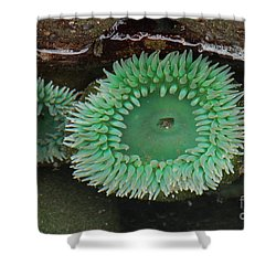 Green Anemone Shower Curtain