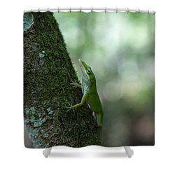 Green Anole Shower Curtain by Christopher L Thomley