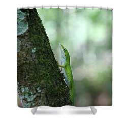 Green Anole Climbing Shower Curtain by Christopher L Thomley