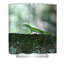 Green Anole Posing Shower Curtain by Christopher L Thomley