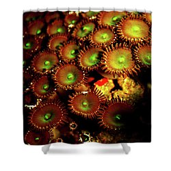 Shower Curtain featuring the photograph Green Button Polyps by Anthony Jones
