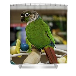 Green Cheek Conure Shower Curtain
