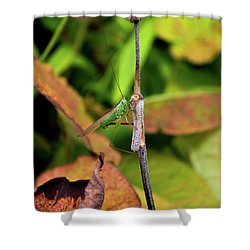 Shower Curtain featuring the photograph Green Conehead Cricket Holding Twig by Scott Lyons