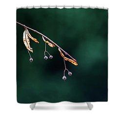 Green Contrast Shower Curtain by Vincent Pelletier
