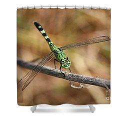 Green Dragonfly On Twig Shower Curtain by Carol Groenen