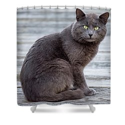 Green Eye Stare Cat Square Shower Curtain by Terry DeLuco