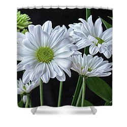 Shower Curtain featuring the photograph Green Eyed Daisy by Bonnie Willis