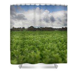 Green Fields 4 Shower Curtain by Douglas Barnard