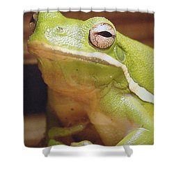Green Frog Shower Curtain by J R Seymour