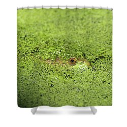 Green Frog Stony Brook New York Shower Curtain by Bob Savage