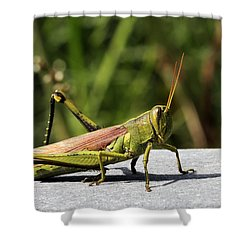 Green Grasshopper Shower Curtain