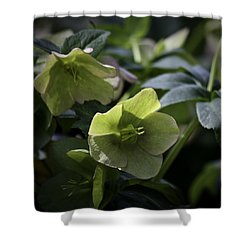 Green Hellebore Squared Shower Curtain by Teresa Mucha