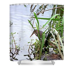 Green Heron Shower Curtain by Al Powell Photography USA