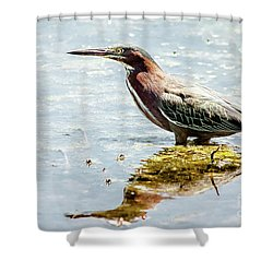 Green Heron Bright Day Shower Curtain by Robert Frederick