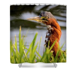 Shower Curtain featuring the photograph Green Heron Closeup  by Ricky L Jones