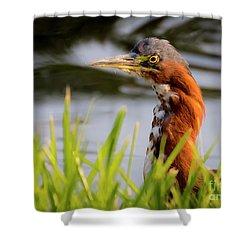 Green Heron Closeup  Shower Curtain