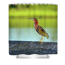 Green Heron Shower Curtain by Eva Kaufman