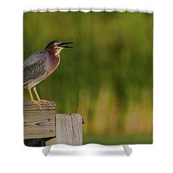 Green Heron Evening Shower Curtain