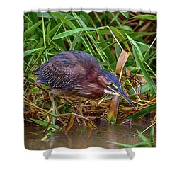 Shower Curtain featuring the photograph Green Heron In Costa Rica by John Haldane