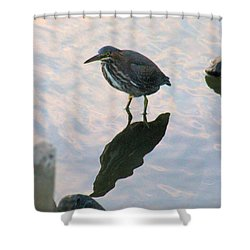 Shower Curtain featuring the photograph Green Heron In Pink Waters by Robert Banach
