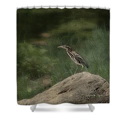 Shower Curtain featuring the photograph Green Heron by Karen Slagle