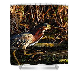 Shower Curtain featuring the photograph Green Heron by Larry Ricker