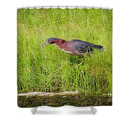 Green Heron On The Hunt Shower Curtain by Ricky L Jones