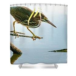 Green Heron Sees Minnow Shower Curtain by Robert Frederick