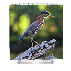 Green Heron Stump Shower Curtain