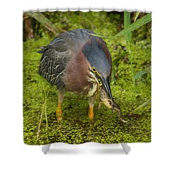 Green Heron With Prey Shower Curtain