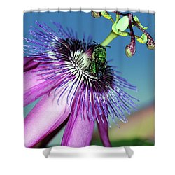 Green Hover Fly On Passion Flower Shower Curtain