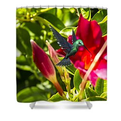 Green Hummingbird Shower Curtain by Pat Cook