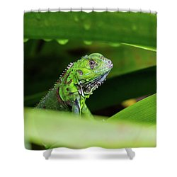 Shower Curtain featuring the photograph Green Iguana Of Costa Rica by John Haldane
