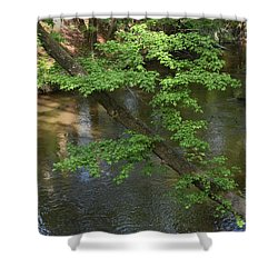 Shower Curtain featuring the photograph Green Is For Spring by Skip Willits