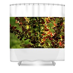 Shower Curtain featuring the photograph Green Leaf Red Leaf by Jerry Sodorff