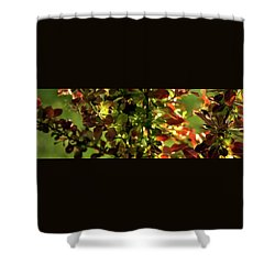 Shower Curtain featuring the photograph Green Leaf Red Leaf Pano by Jerry Sodorff