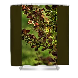 Shower Curtain featuring the photograph Green Leaf Spotlight by Jerry Sodorff