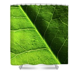 Shower Curtain featuring the photograph Green Leaf Veins by Ana V Ramirez