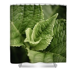 Shower Curtain featuring the photograph Green Leaves Abstract II by Marco Oliveira